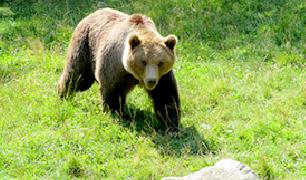 Observación de fauna salvaje