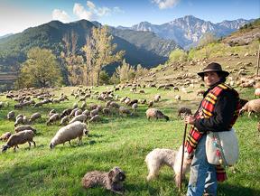 Carn del Cadí-Moixeró (¡Aprende a hacer de pastor!)