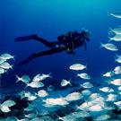 Actividades náuticas y de naturaleza en el Estartit y las Islas Medas