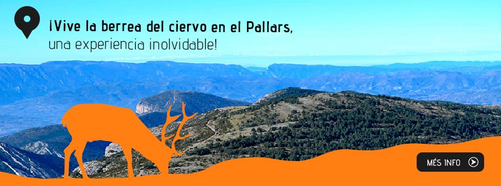 ¡Vive la berrea del ciervo en el Pallars,  una experiència inolvidable!