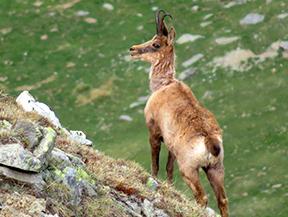 Fauna salvaje en el Boumort (2 d�as)