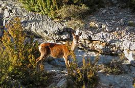 Fauna salvaje en el Boumort (2 días)