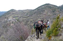 Ramat de Camins con burros