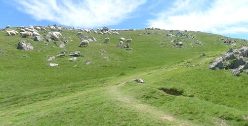 Valles Pirenaicos (Navarra)