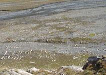 Numerosas y curiosas inscripciones hechas con piedras.