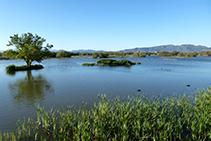 <i>Llauna</i> con islotes, pollas de agua y el macizo del Canigó al fondo.