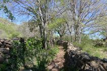 Muros de piedra seca definen el camino.