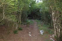 Los avellanos son los protagonistas como elementos de vegetación en este inicio de ruta.