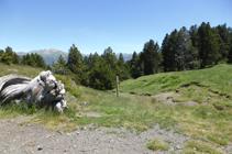 Camino del collado de Montaner hacia los Cortals de Sispony.