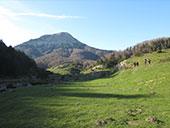 Bosque de Gamueta desde el refugio de Linza