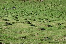 Prados llenos de pequeñas montañas hechas por topos.