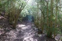 Zona boscosa.