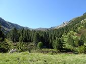 Camino de Prat Primer y bosque de la Caülla