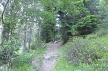 Entre el bosque de ribera y el avetar.