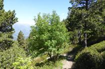 Bosque de la Caülla.