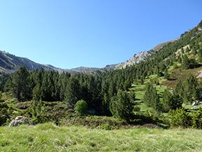 Camino de Prat Primer y bosque de la Ca�lla