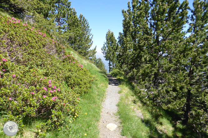 Camino de Prat Primer y bosque de la Caülla 1