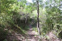 Durante muchos tramos del barranco, el bosque es denso.