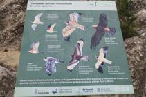 Panel informativo que nos da información de las aves rapaces de la zona.