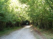 La pista avanza por un bosque muy sombrío, entre avellanos y hayas.