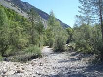 Transitamos por un arenal lleno de guijarros, sedimentos y vegetación de ribera.