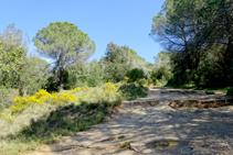 Aulagas camino a Sant Miquel.