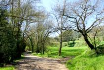 Campos de cereales en el valle de Sant Daniel.