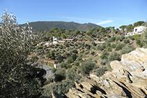 Campos de olivos y bosques de pinos. Al fondo, la montaña del Pení.