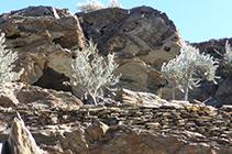 Extrañas formas de las rocas erosionadas por el viento y la sal.