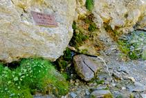 Fuente de la Roca.