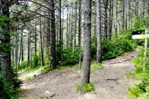 Bajando por el bosque de la Serra.