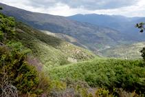 Bosque de Tolzó y valle de Escós.