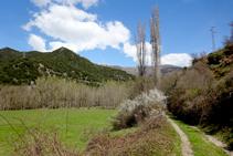Plantaciones de chopos en Baro.
