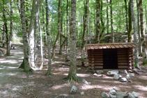 Cabaña en el bosque de hayas.