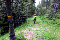 Empezamos la bajada por el bosque de la Obaga de Os.