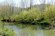 Bosque de ribera en el río Ter.