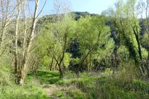 El bosque de ribera en el desfiladero.