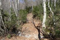 El sendero gana altura por el interior de un bosque.