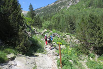 Dejamos atrás el bosque frondoso y nos adentrarnos a la vegetación alpina.