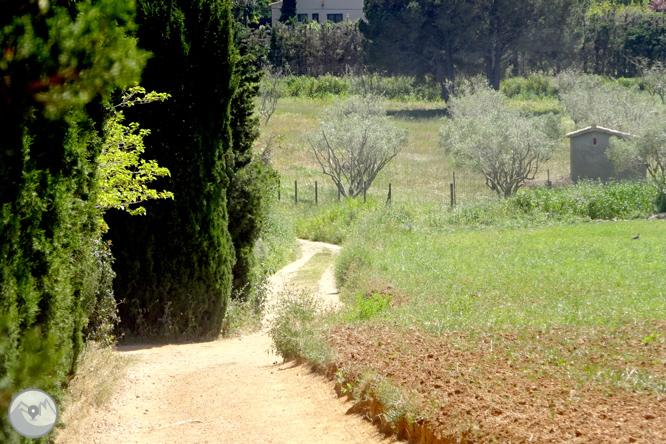 De Llafranc a Tamariu por caminos tradicionales y de ronda 1