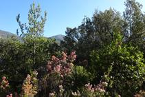 Detalle del bosque camino al collado de Jou.