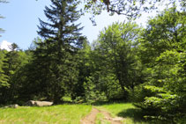 El camino se adentra por entre medio del bosque.