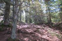 Subiendo por medio del bosque.