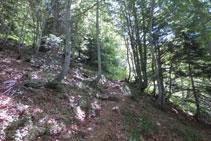 El camino avanza por entre el bosque.