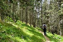 Caminito que se adentra en el bosque de Jovell.