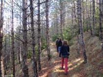 El bosque pasa por la zona umbría de la colina donde se alza el castillo.