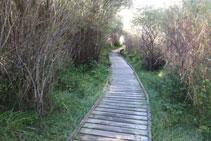 Tramo con una pasarela de madera para poder caminar cómodamente por una zona húmeda.