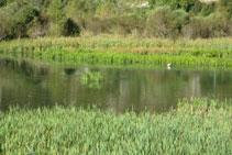 El Salencar es un refugio para muchas aves acuáticas.