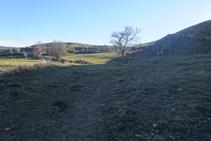 Cruzamos un prado con árboles aislados.
