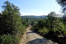 El bosque del macizo de las Gavarres.
